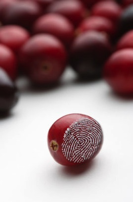 cranberry with fingerprint alluding to analytic testing
